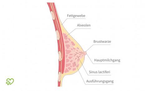 Groß frau unterschiedlich brust Brustformen: Welcher