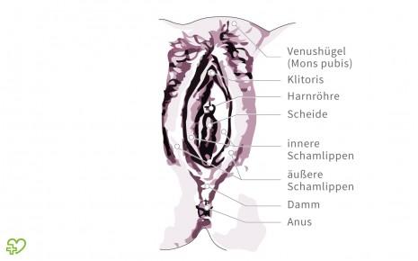Weibliche scheide die Vagina